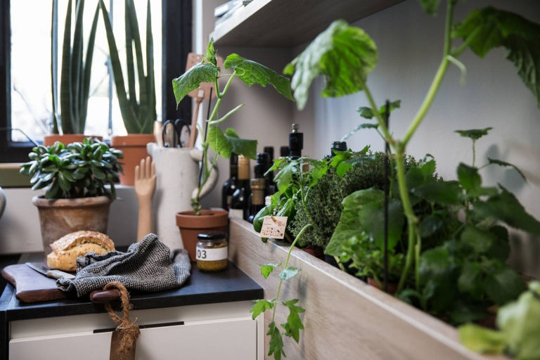 jardin intérieur_plante aromatique_cuisine_IDKrea, rennes